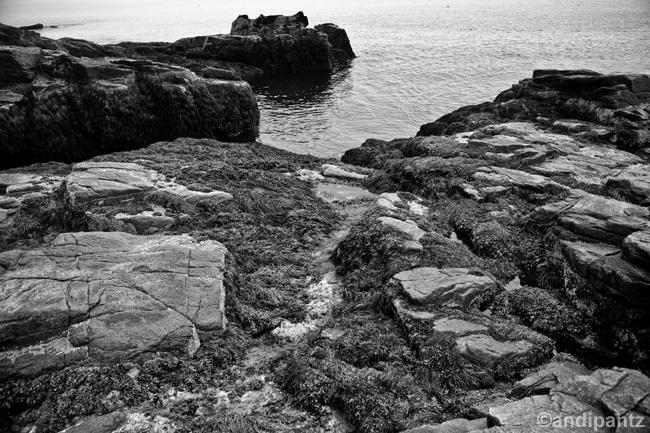 tidepoolrocks2.jpg