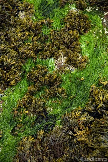 seaweed3.jpg