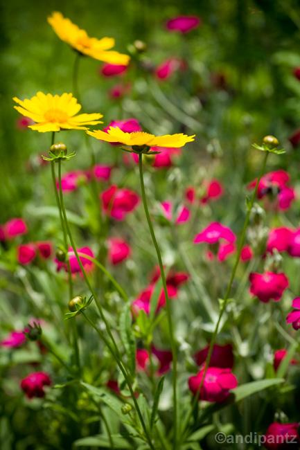 colorfulflowers.jpg