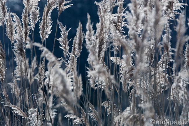 featherplants2.jpg