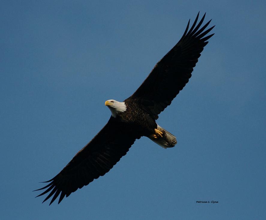 photo-bird-10-05-08-046_copy_signature.png