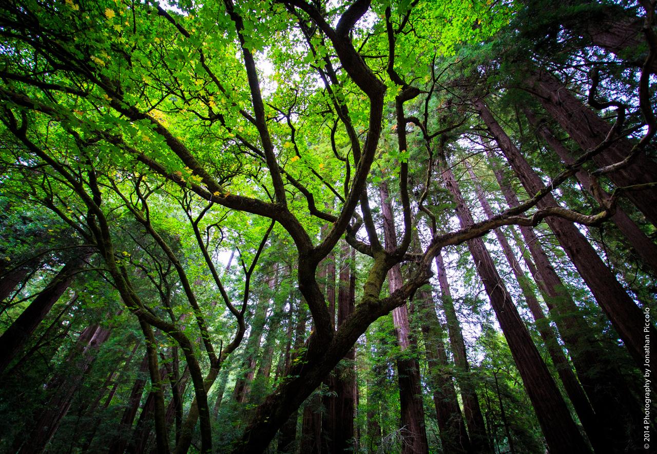 muir-woods-2014.jpg