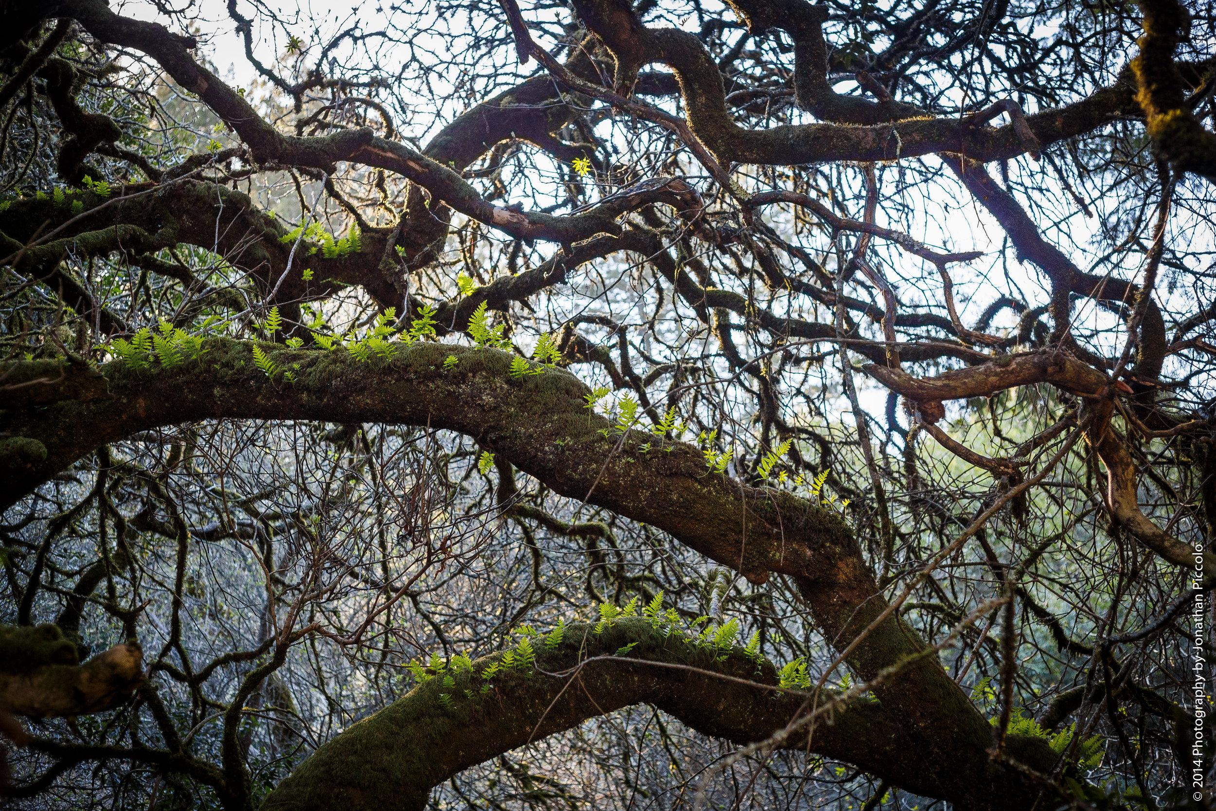 muir-woods-2014-2.jpg