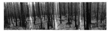 John O'Neil  Otways  Photograph 81x3000cms(framed $3,500)