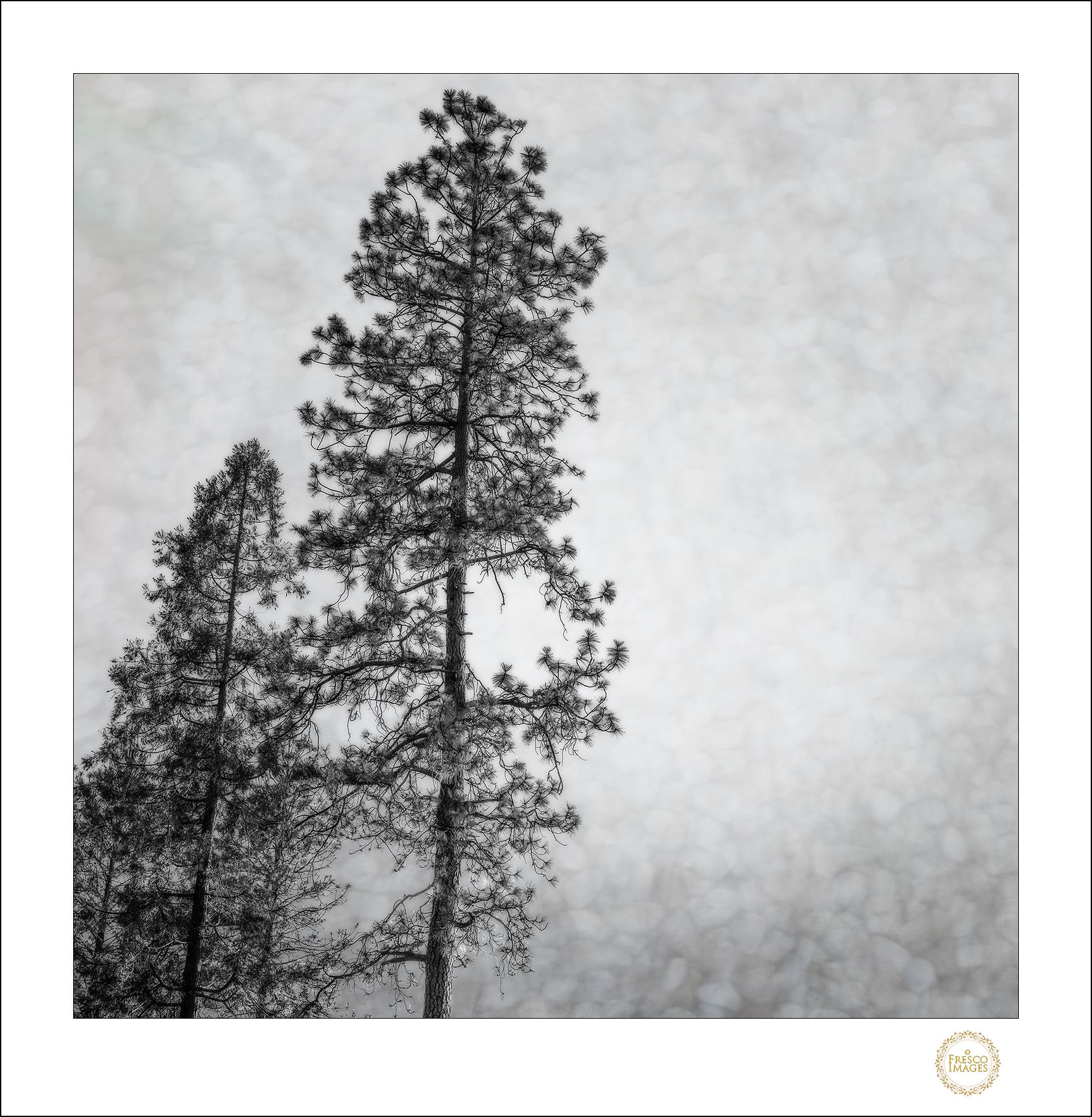 'Pines'