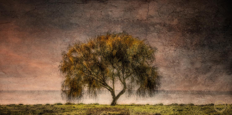 'Foreshore Tree'