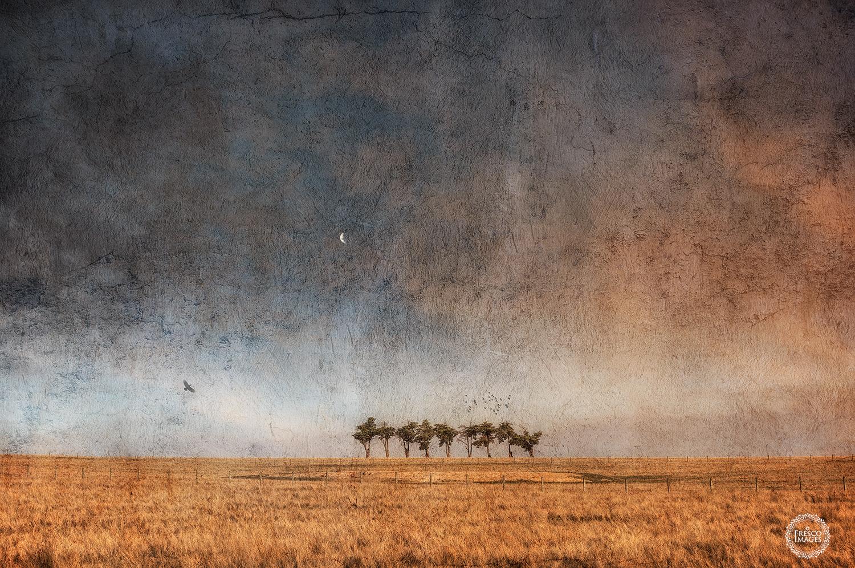 'Yarra Valley Treeline'