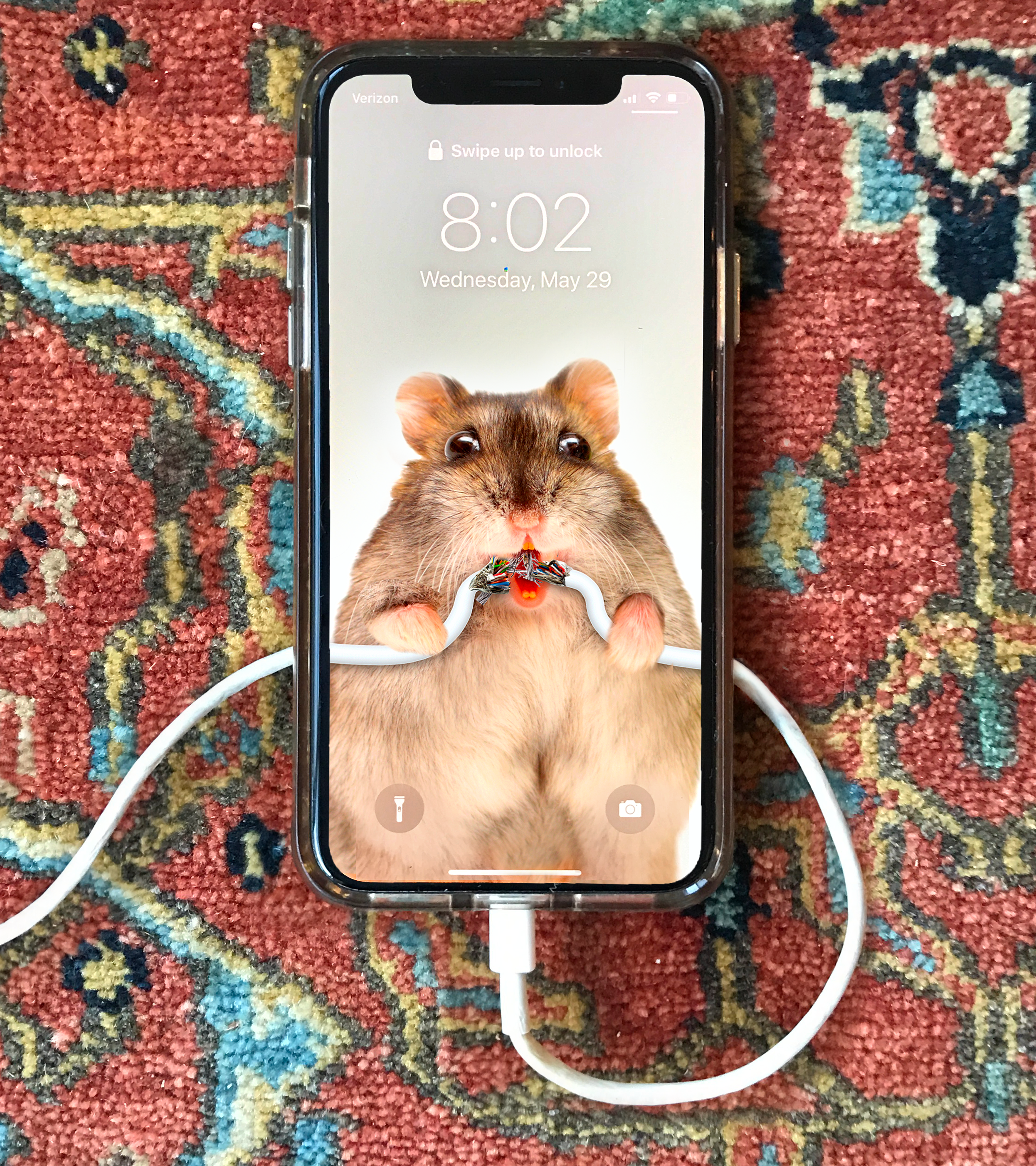 Rat Chewing Charger Wallpaper Post.png
