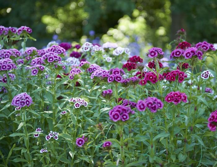 moat flowers_142.jpg