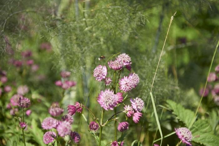 moat flowers_151.jpg