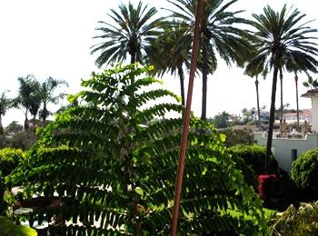 Step into a magical space... Destination: Park Hyatt Aviara, Carlsbad, CA
