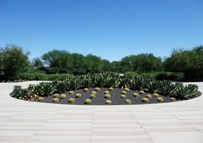Greeted by Golden Barrel cactus at the Sunnylands Visitor's Center.