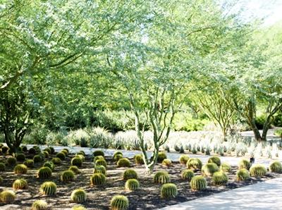 16 VC garden 400p cactuses.JPG