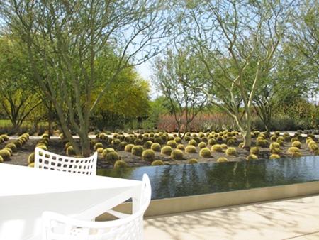 Rows of Golden Barrel cactus lead the way through the garden at Sunnylands Café.