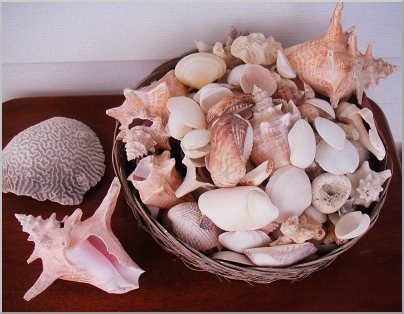 Shells I collected while staying on Antigua.