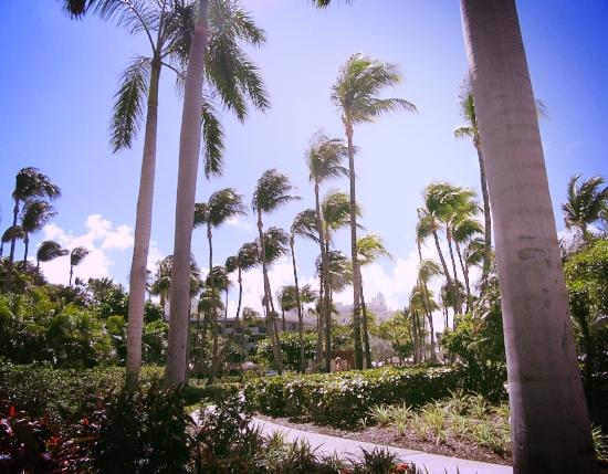 the tropical garden surrounding the Hilton walk way to the beach
