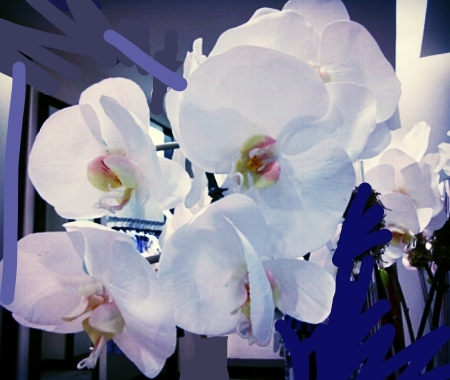 blooms white orchids.JPG