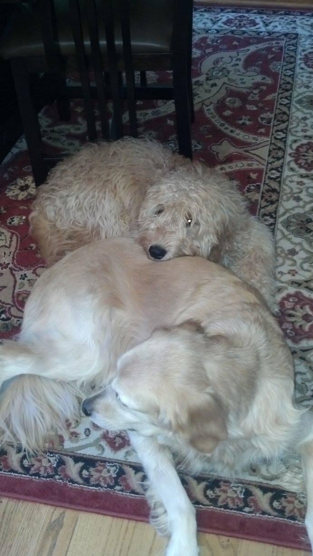 Cuddling with Clhloe