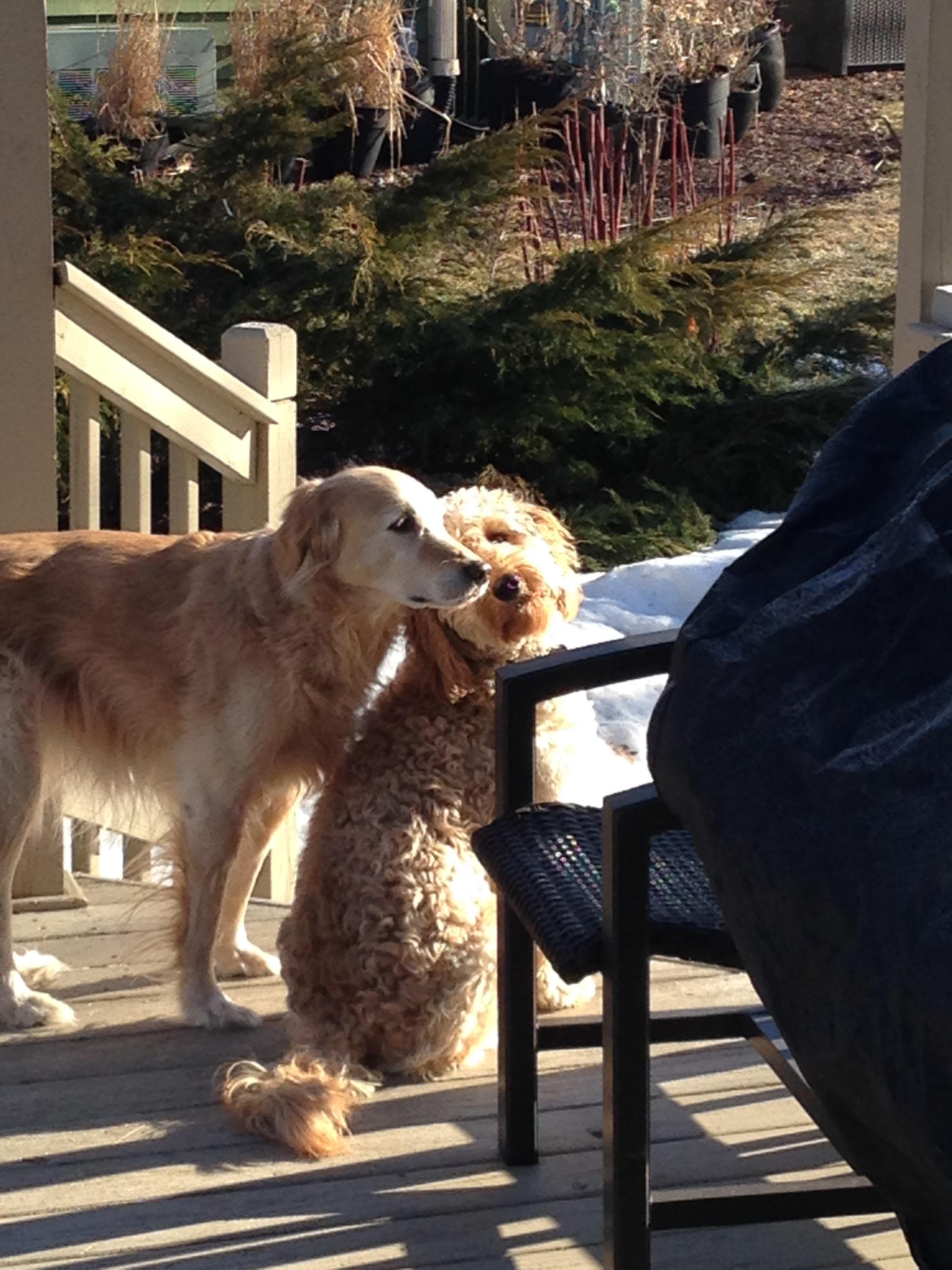 2 dogs2.jpg
