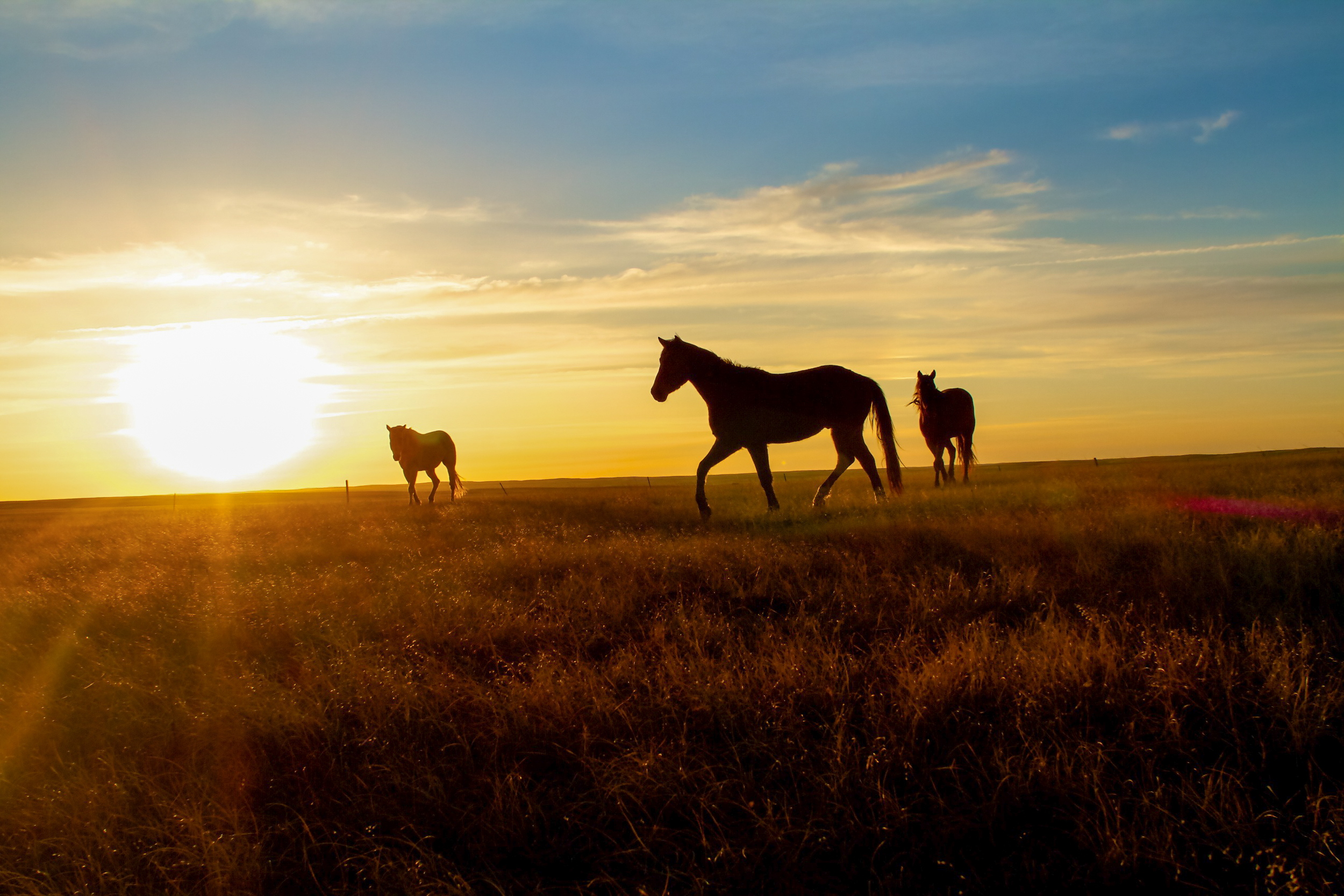 horses at sunset.jpg