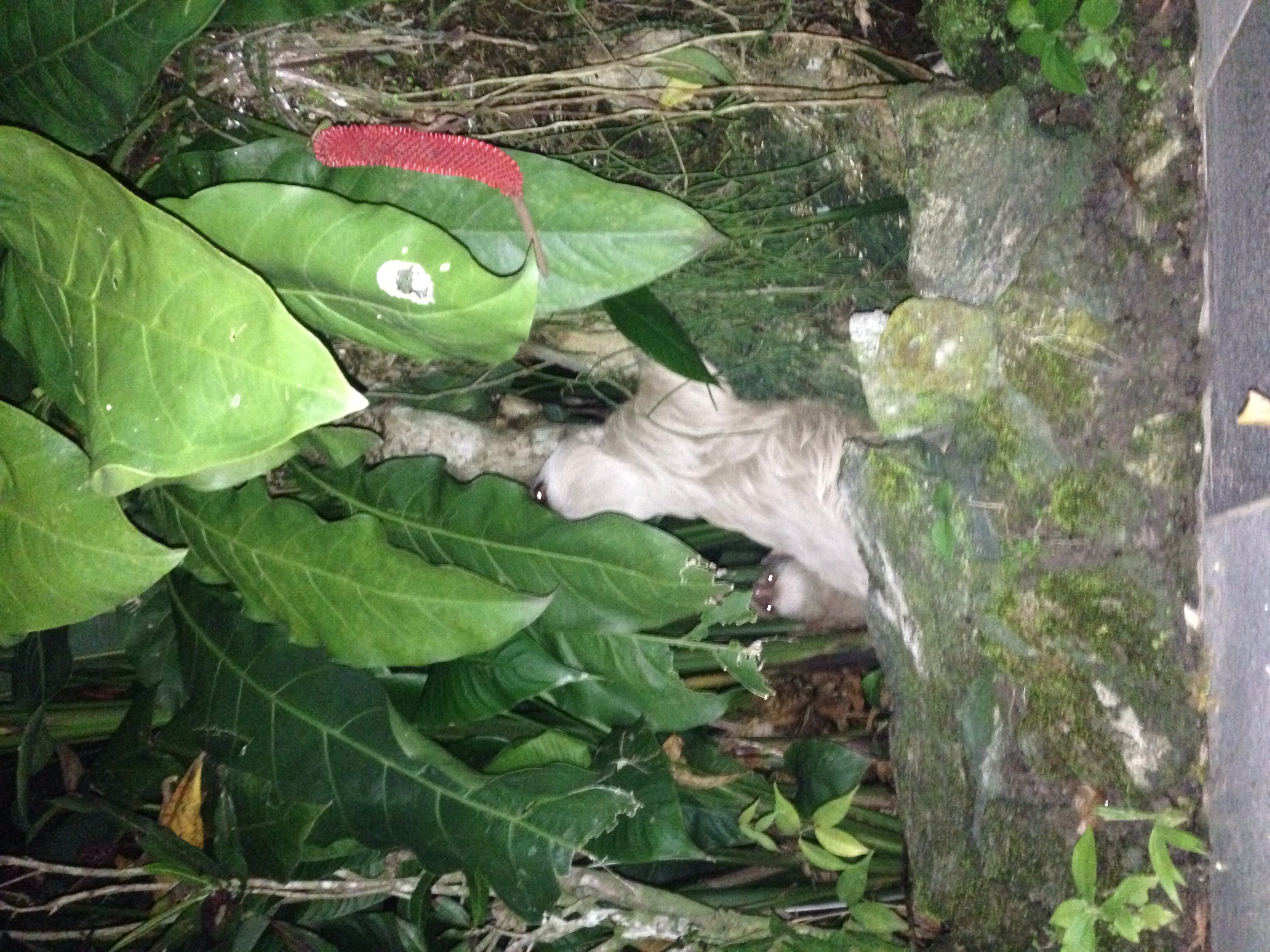 The  Casa Verde Lodge  has a sloth family!