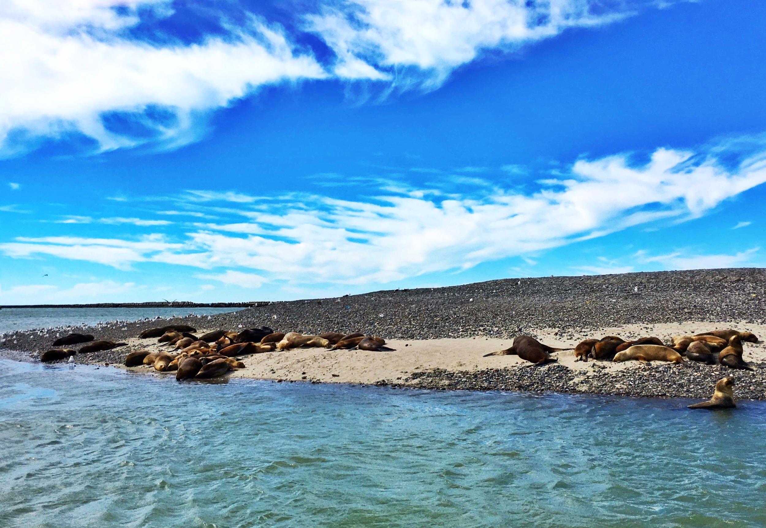 sea-lions-playa-union-rawson-argentina-ochristine