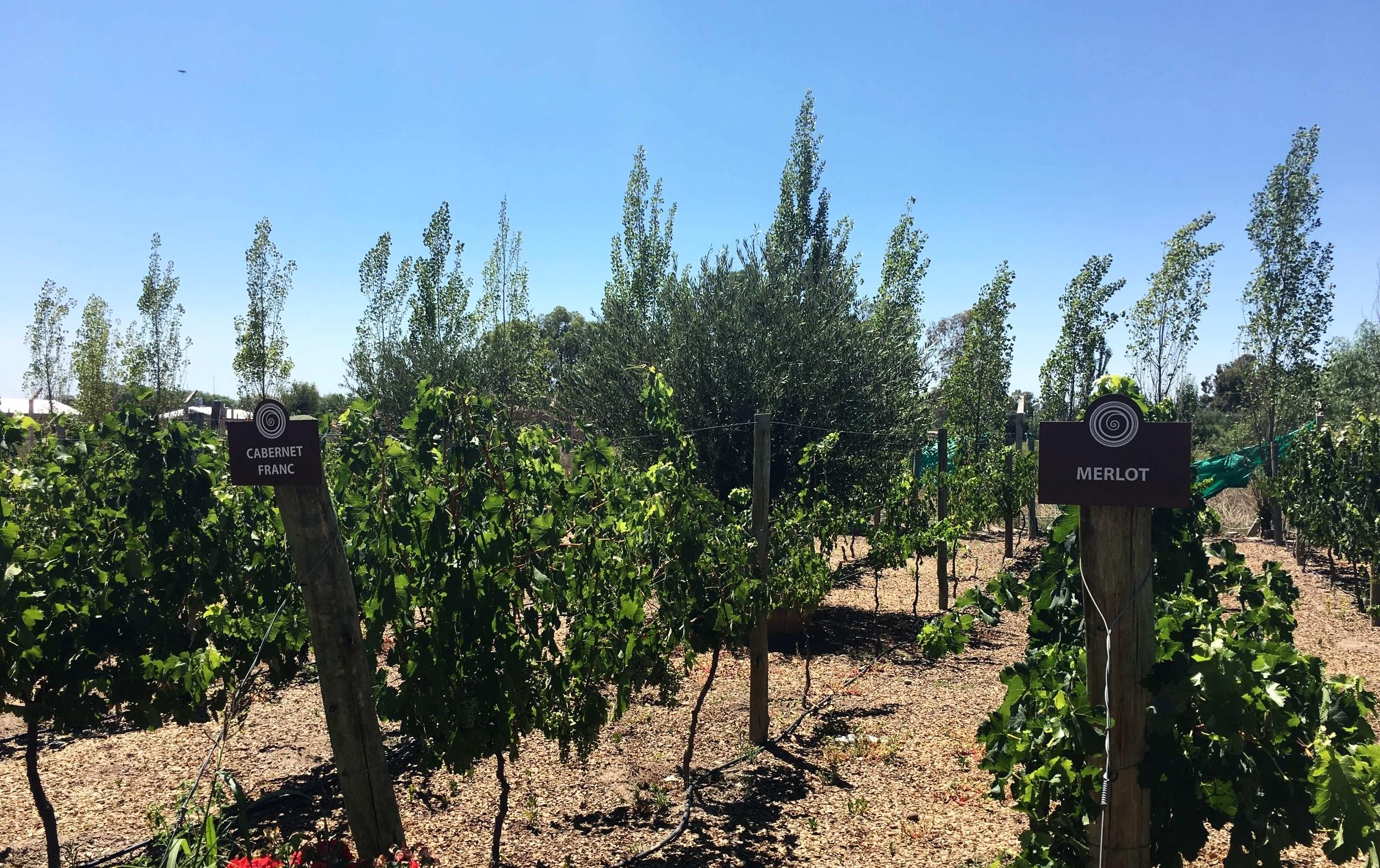 sinfin-vineyard-mendoza-maipu-ochristine