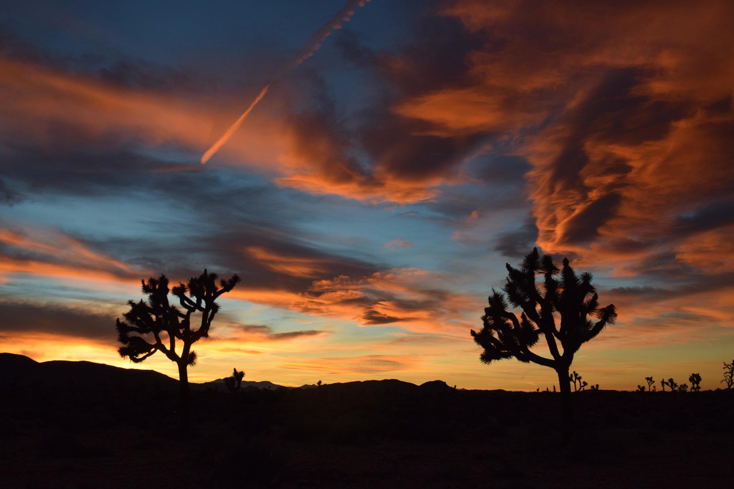 joshua-tree-photography-california-usa