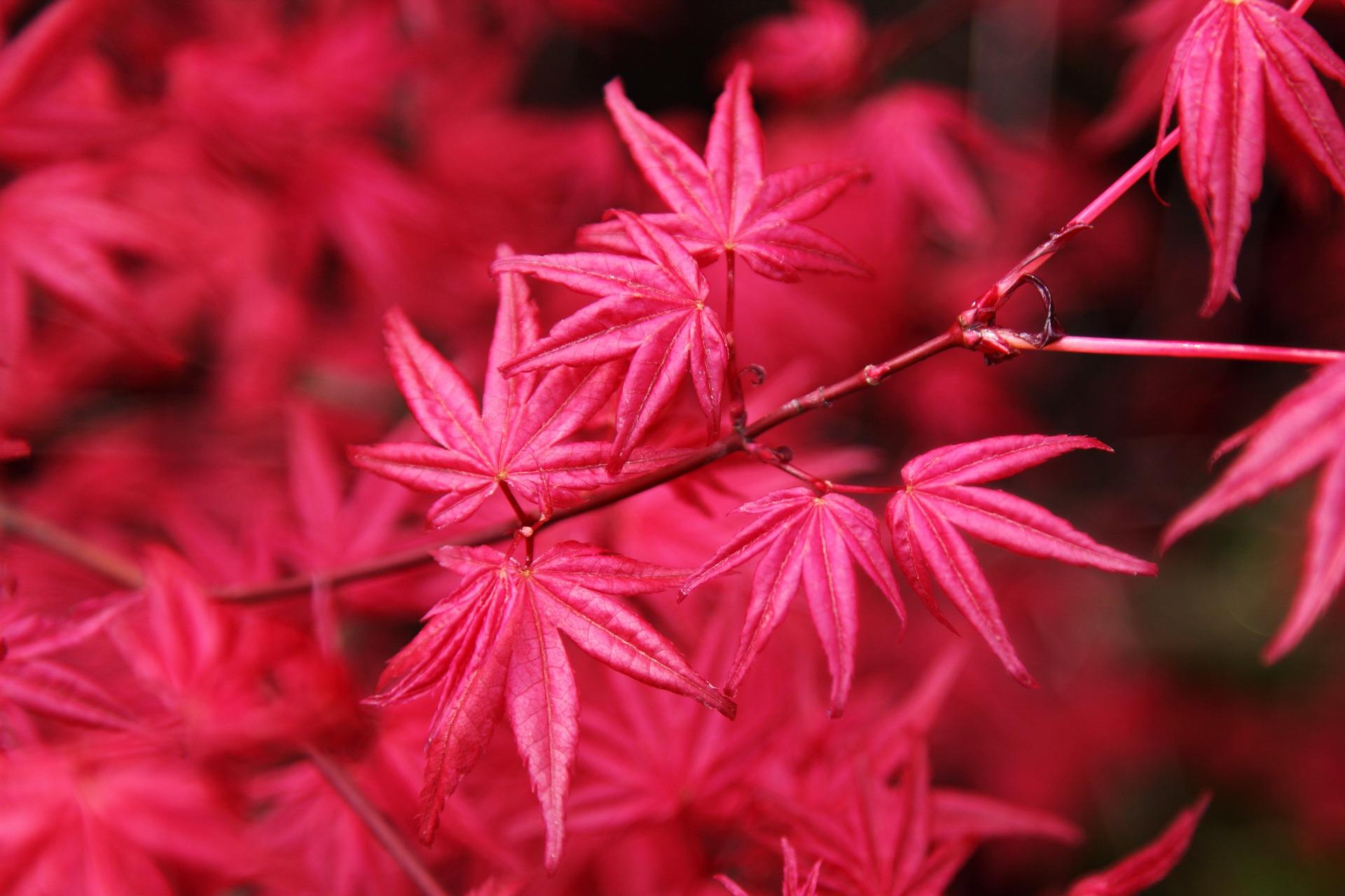 autumn-16055_1920.jpg