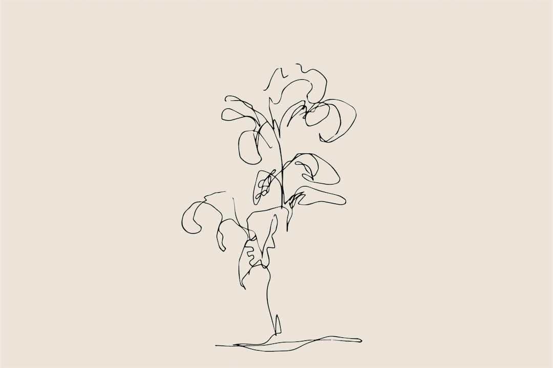 The Plant.png