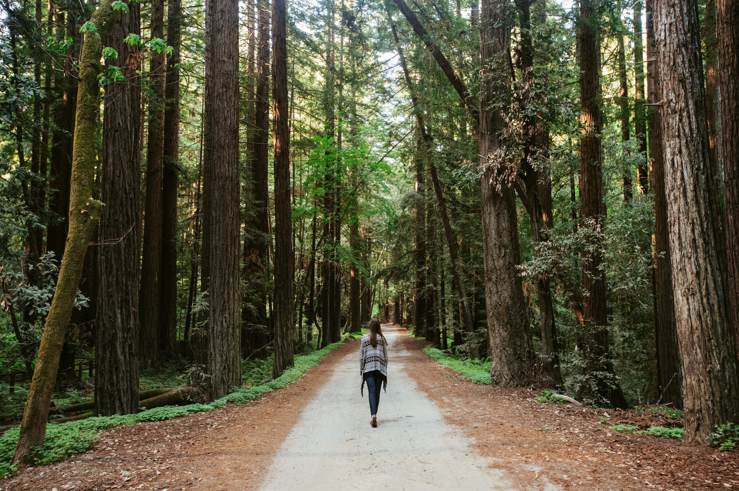 Thanks Travis for snapping this pic of me beneath some giant redwoods!