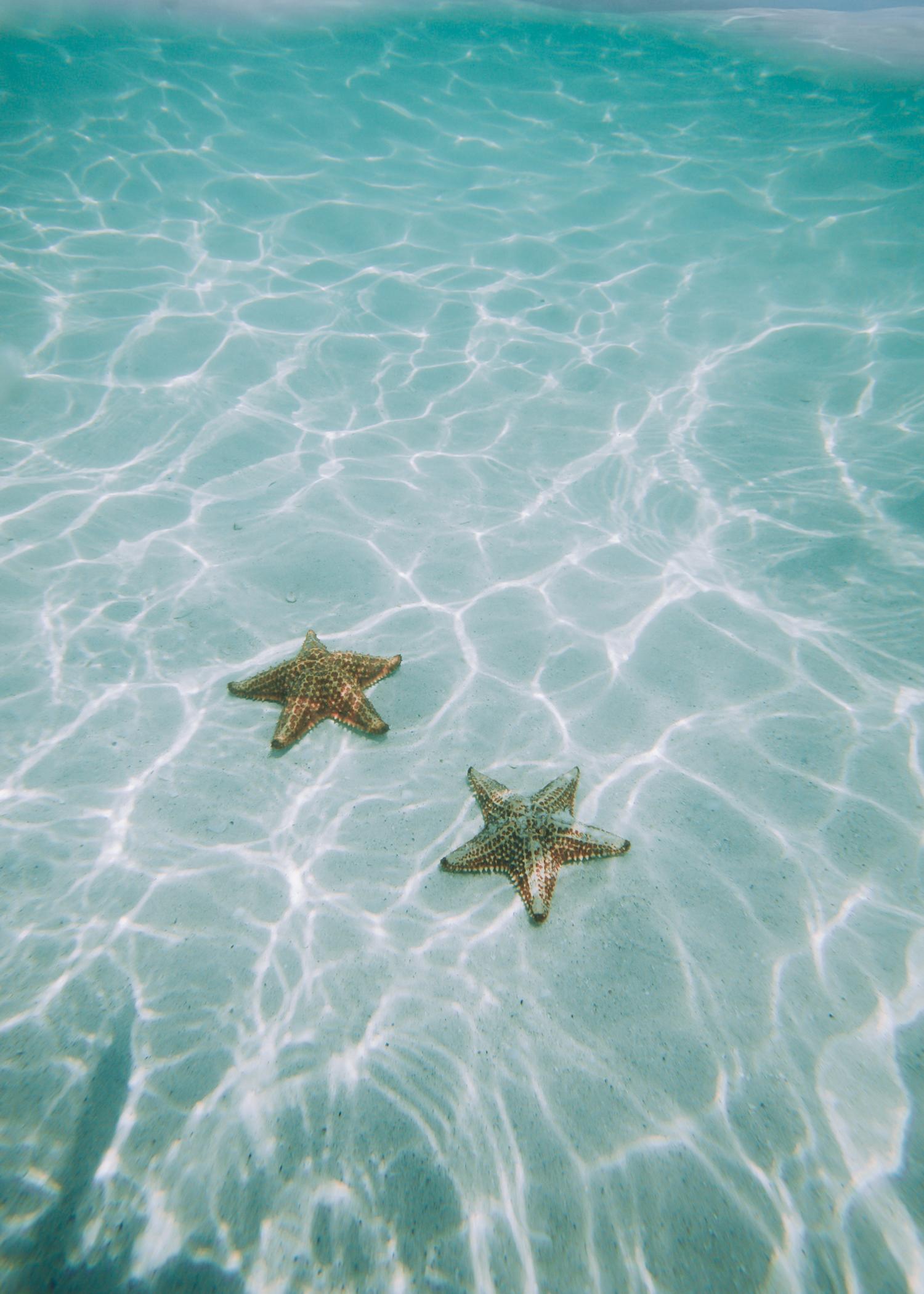 starfish(web).jpg