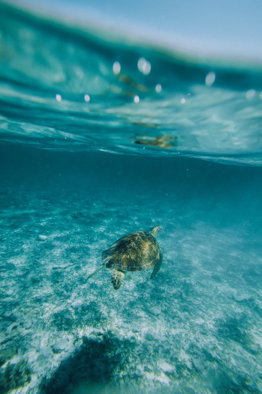 cayman_turtle(web).jpg