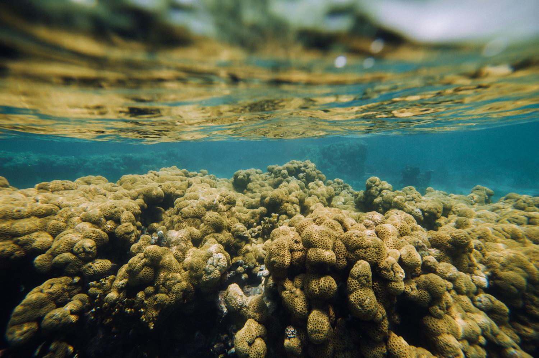 coral(web).jpg