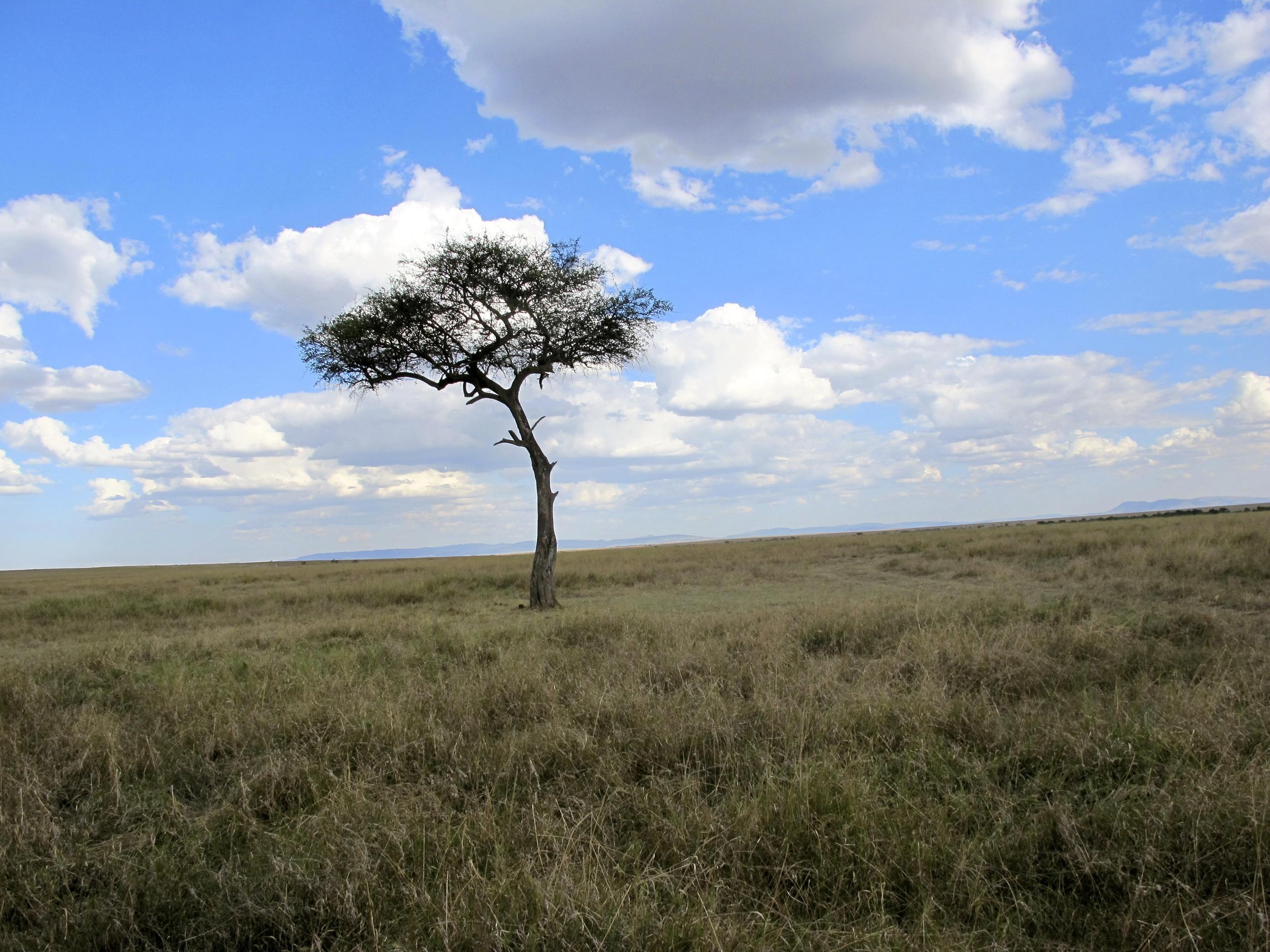 Africa mara
