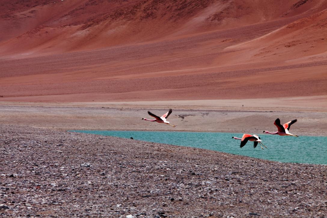Atacama005.jpg