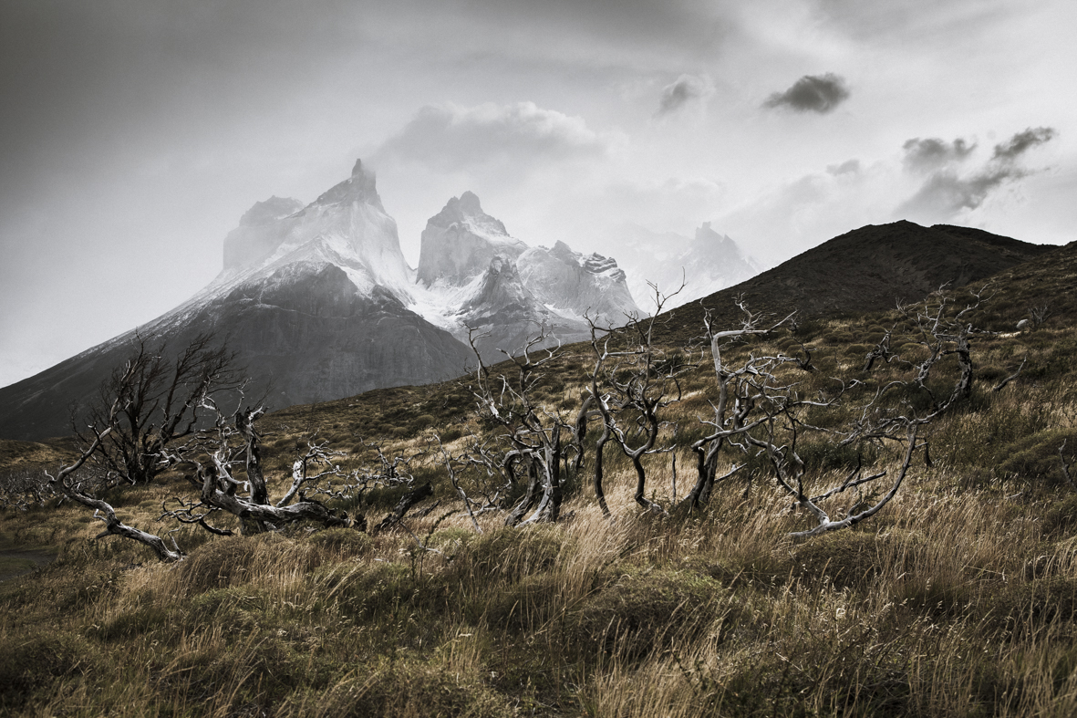 patagonia 24