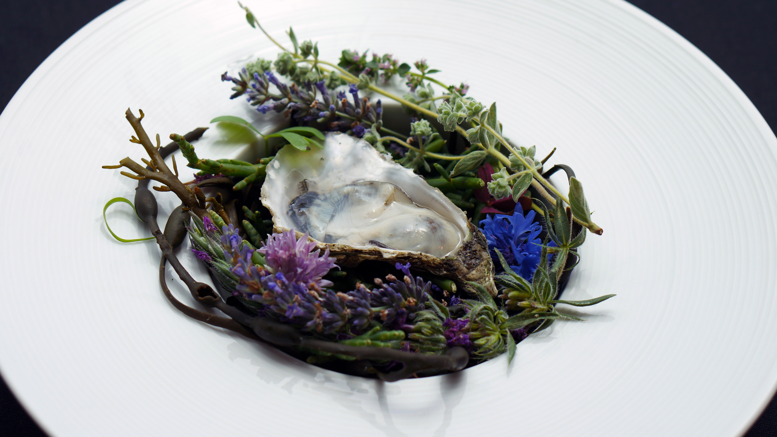2014 - aromatic oyster 2.jpg
