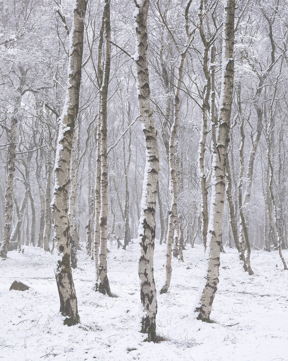 Winter+Birch.jpg