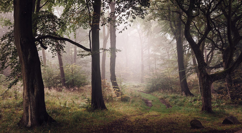 Woodland+wander+01.jpg