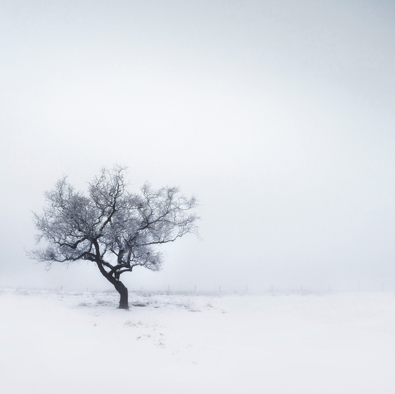 Isolated+Winter.jpg