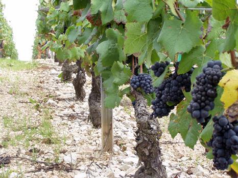 Bourgogne-Claudie-Jobard_4345_image.jpg