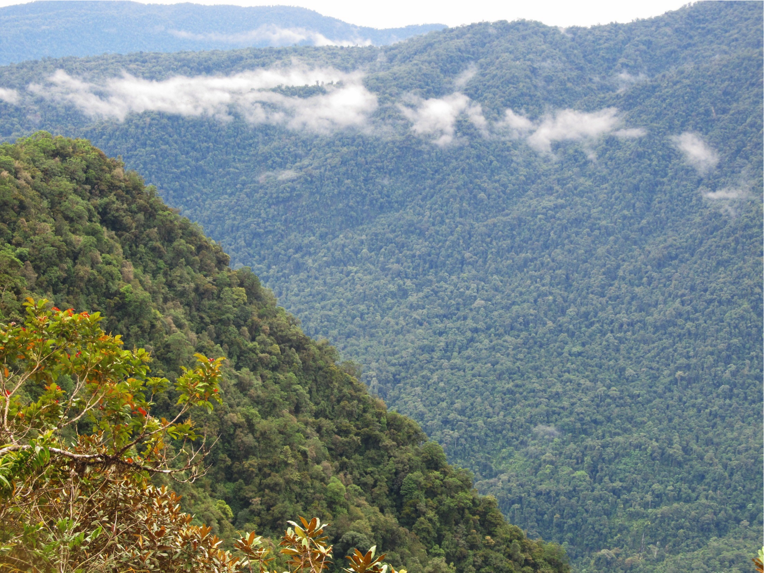 Steep and lush: Bird species generally inhabit narrow elevational zones on tropical mountains