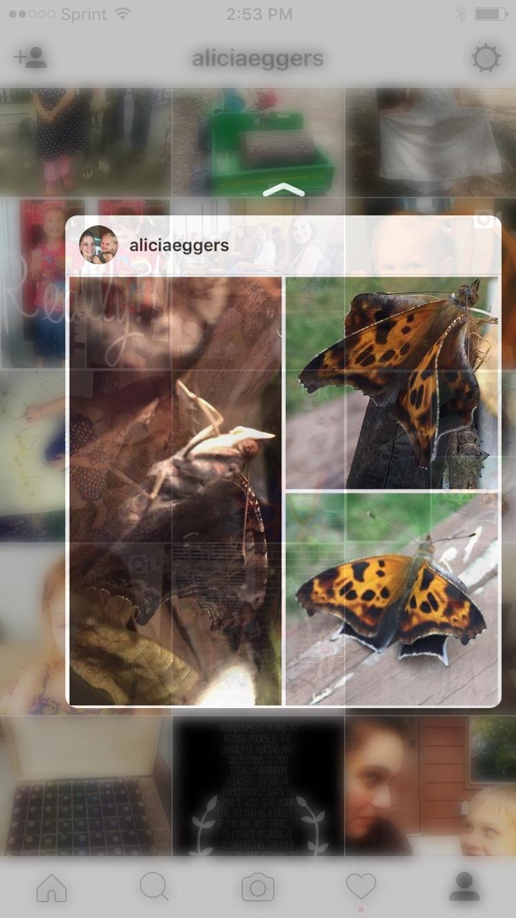 Homeschooling is watching butterflies, moths, cocoons, and chrysalises