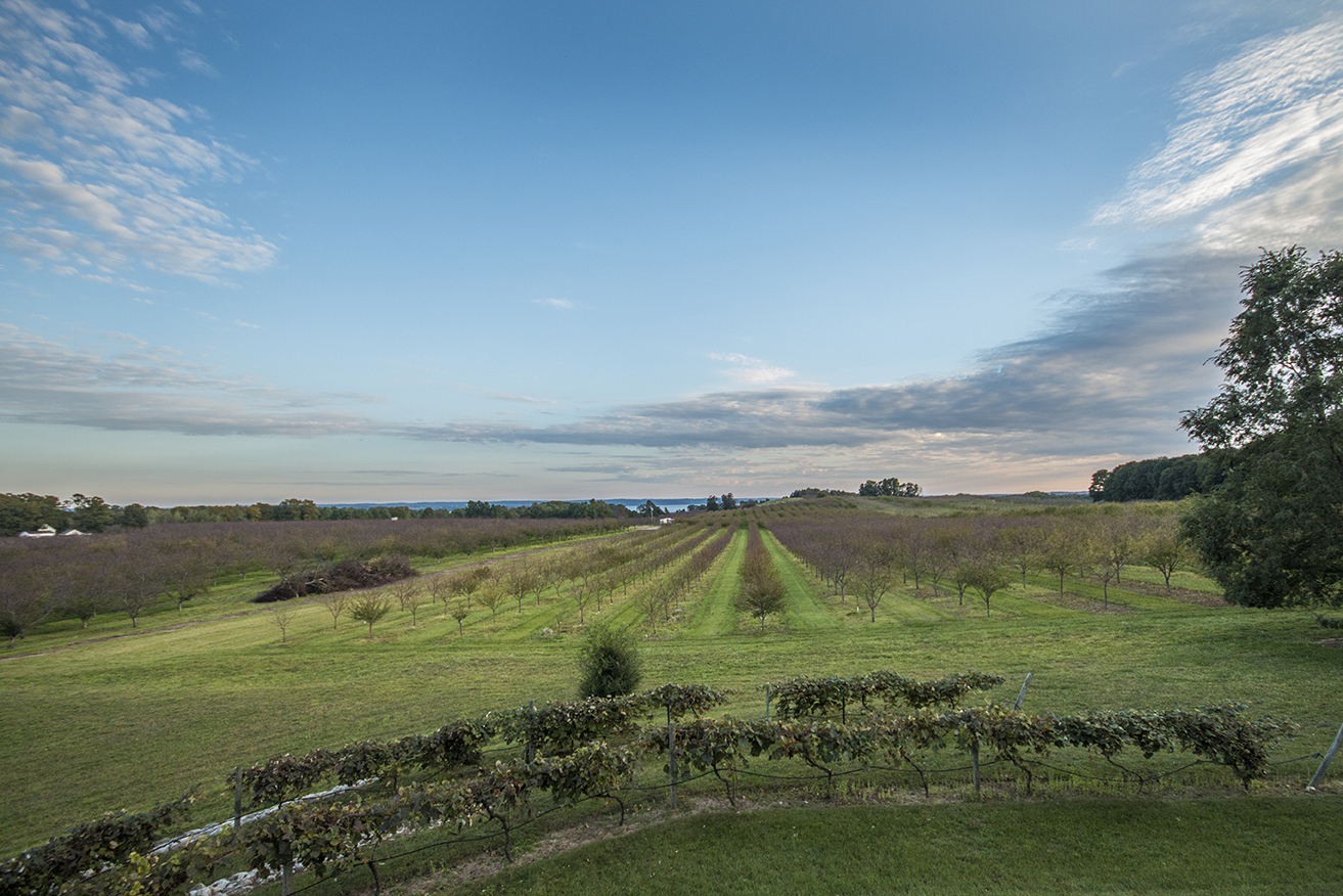 The view from our window, overlooking the grape vineyard and cherry orchard.