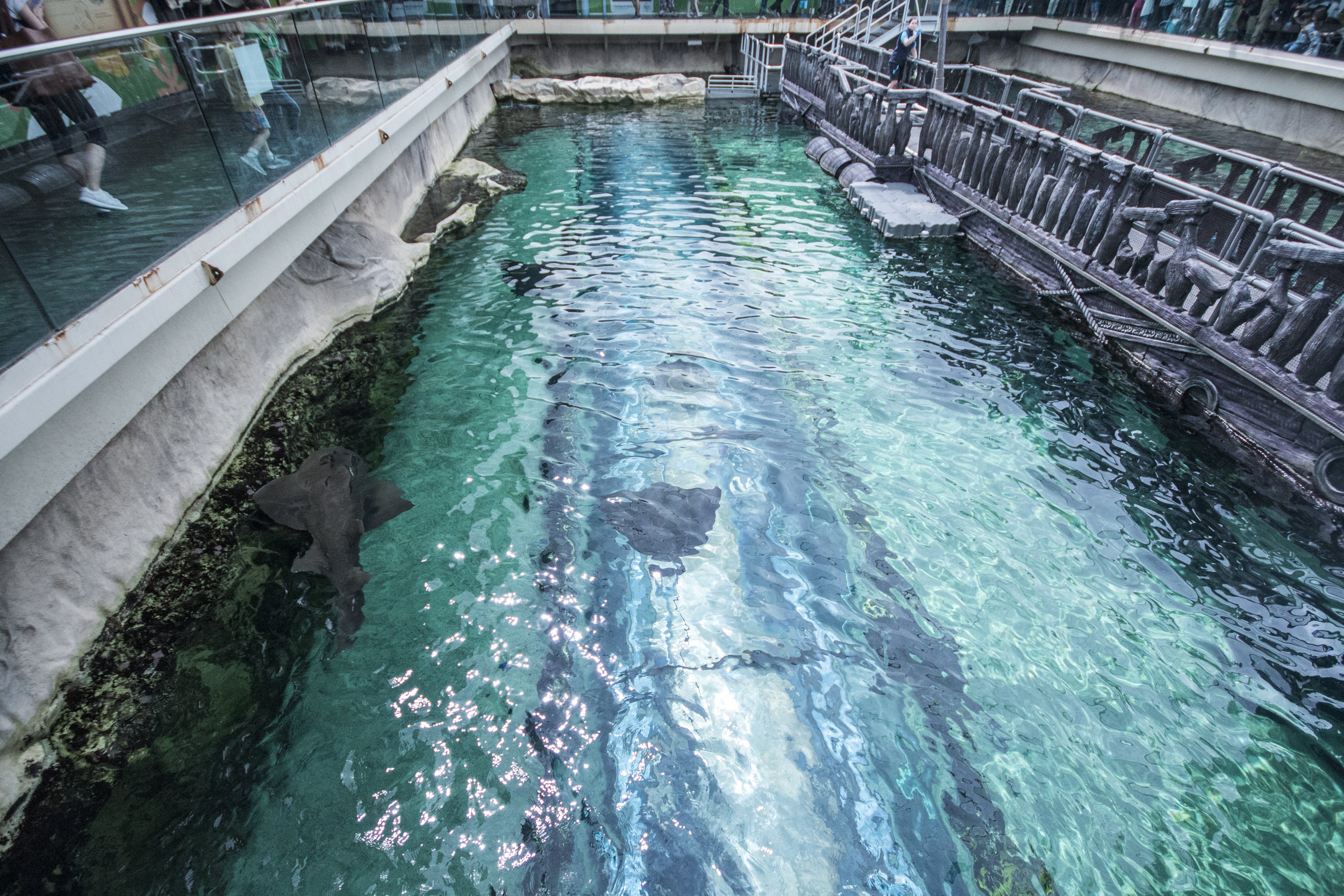 The top views of the walk-through aquarium.