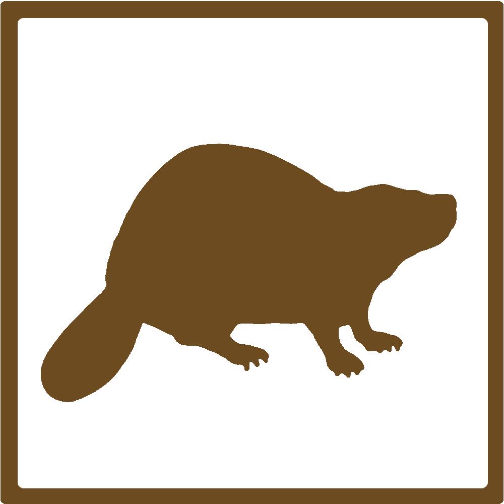 beaver-newnative.JPG