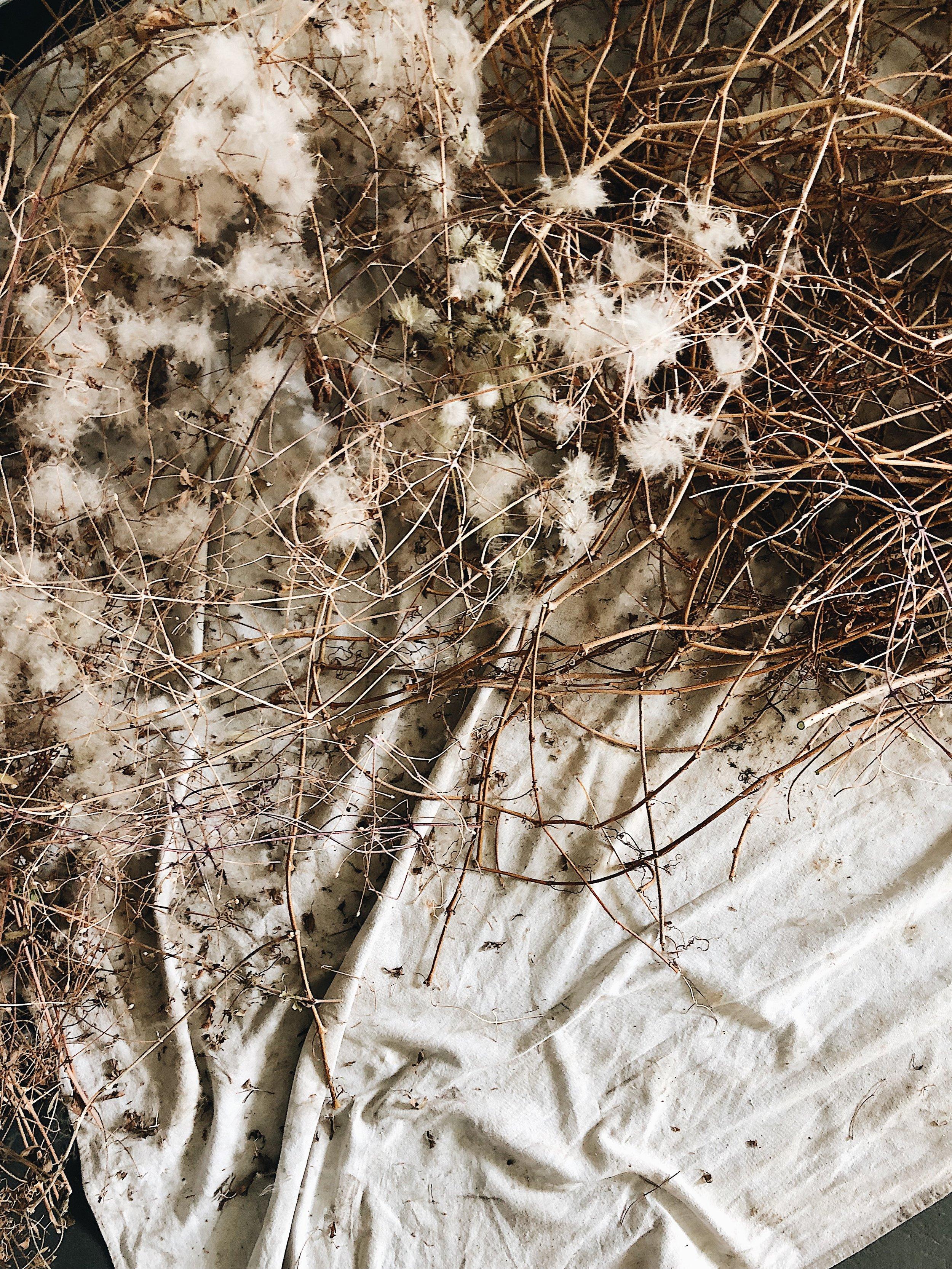 soilandstemclasses