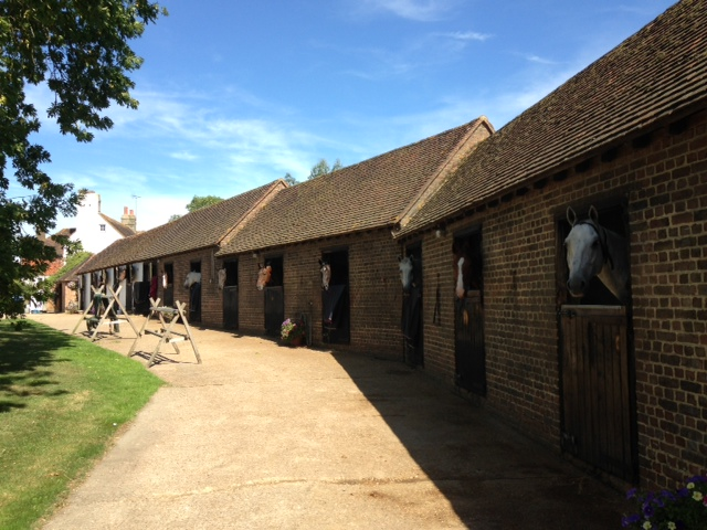 The horses looking happy and settled at Stuccles