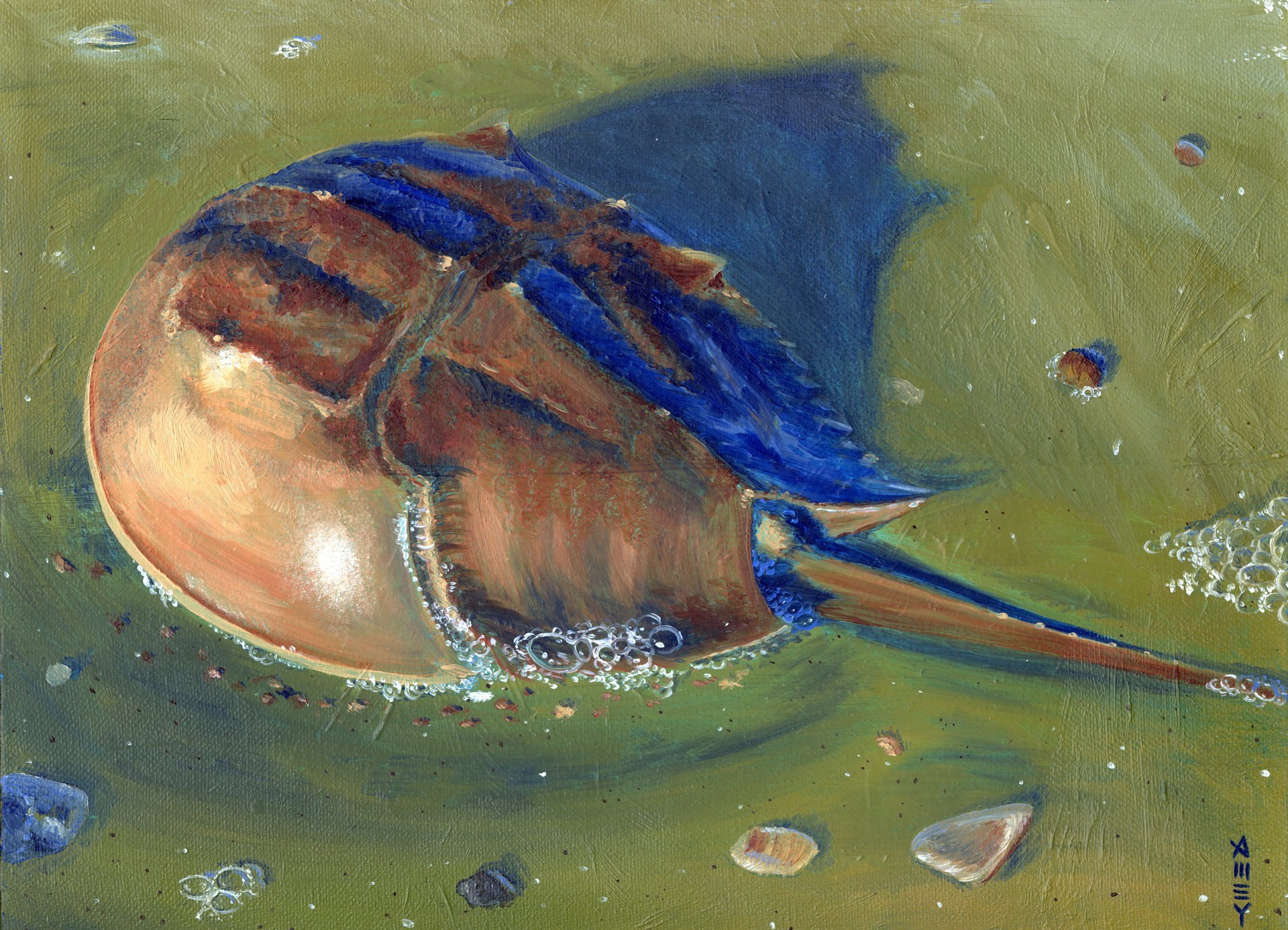 "Horse Shoe Crab    11"" x 14""  2000"